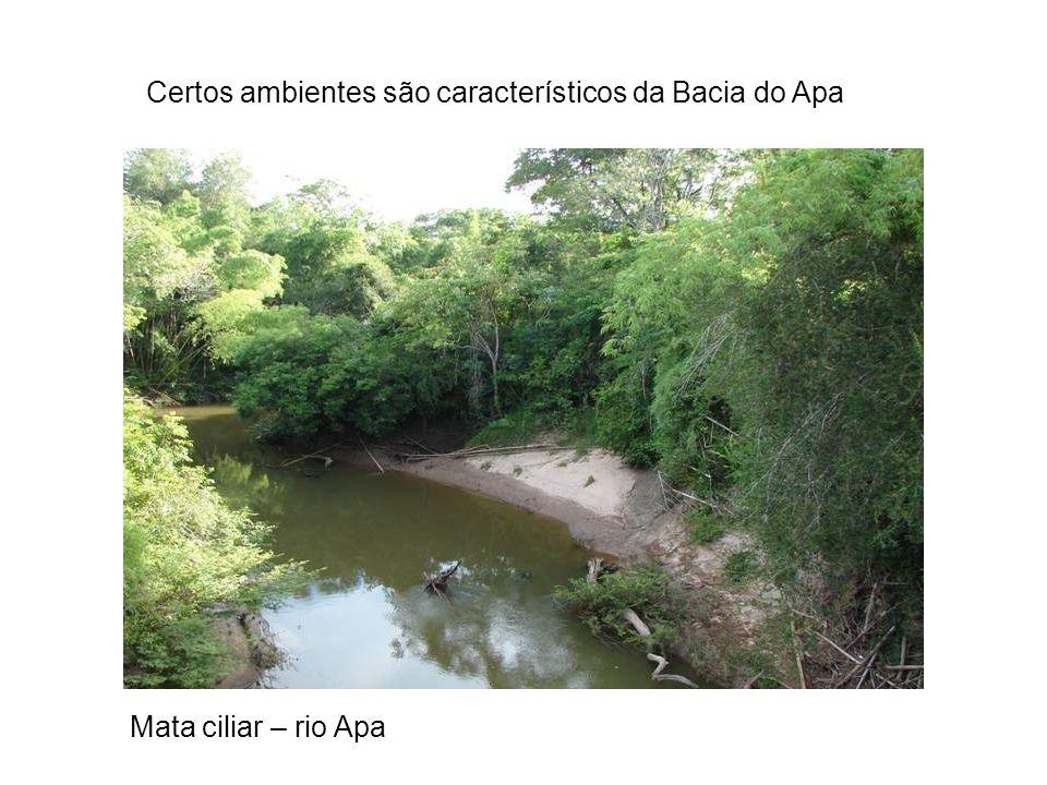 Certos ambientes são característicos da Bacia do Apa