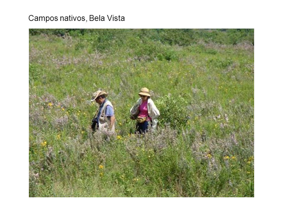Campos nativos, Bela Vista