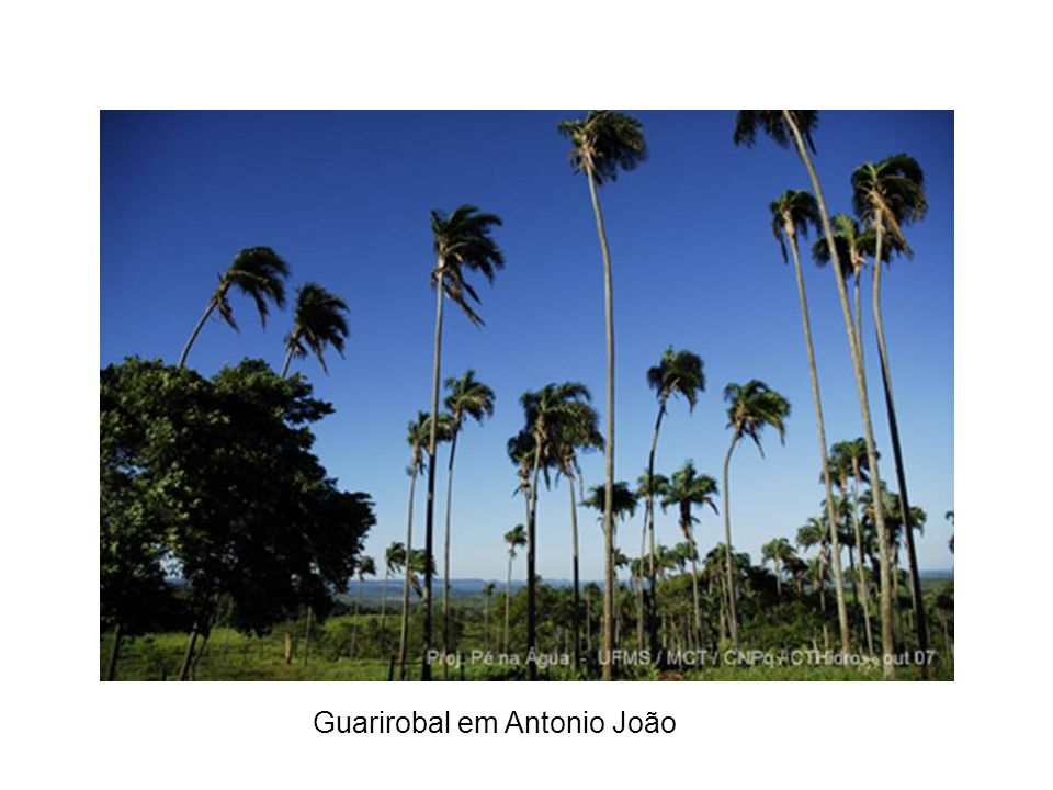 Guarirobal em Antonio João