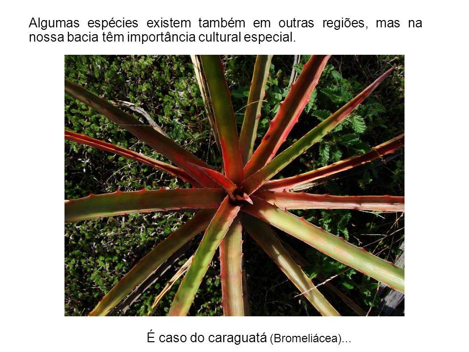 Algumas espécies existem também em outras regiões, mas na nossa bacia têm importância cultural especial.