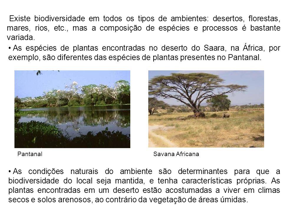 Existe biodiversidade em todos os tipos de ambientes: desertos, florestas, mares, rios, etc., mas a composição de espécies e processos é bastante variada.
