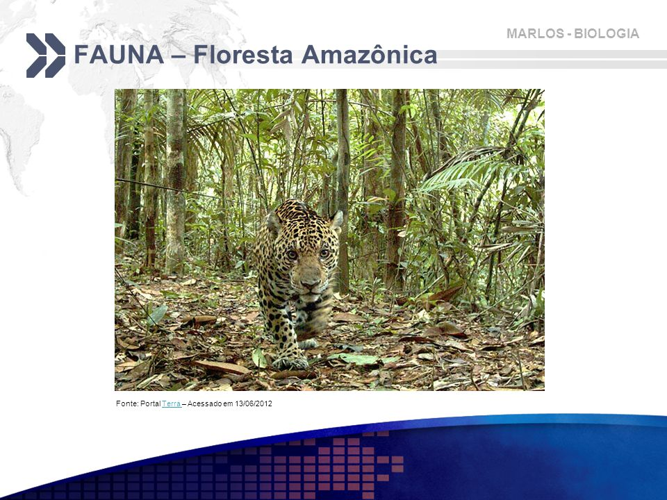 FAUNA – Floresta Amazônica
