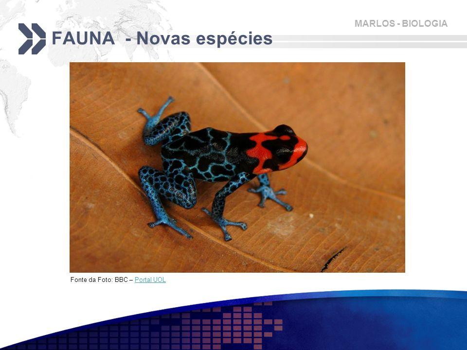 FAUNA - Novas espécies Fonte da Foto: BBC – Portal UOL