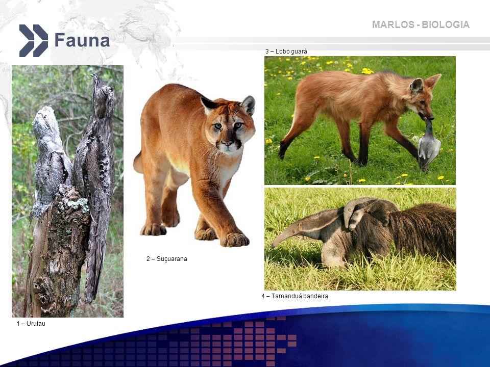 Fauna 3 – Lobo guará 2 – Suçuarana 4 – Tamanduá bandeira 1 – Urutau