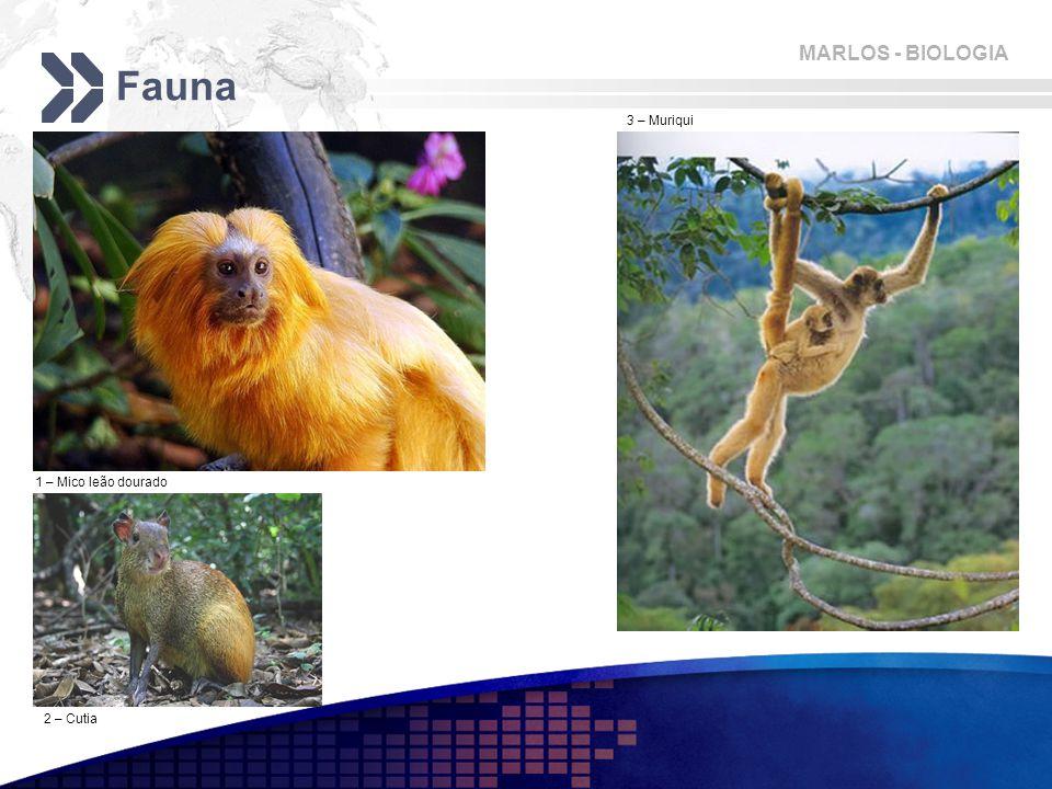 Fauna 3 – Muriqui 1 – Mico leão dourado 2 – Cutia