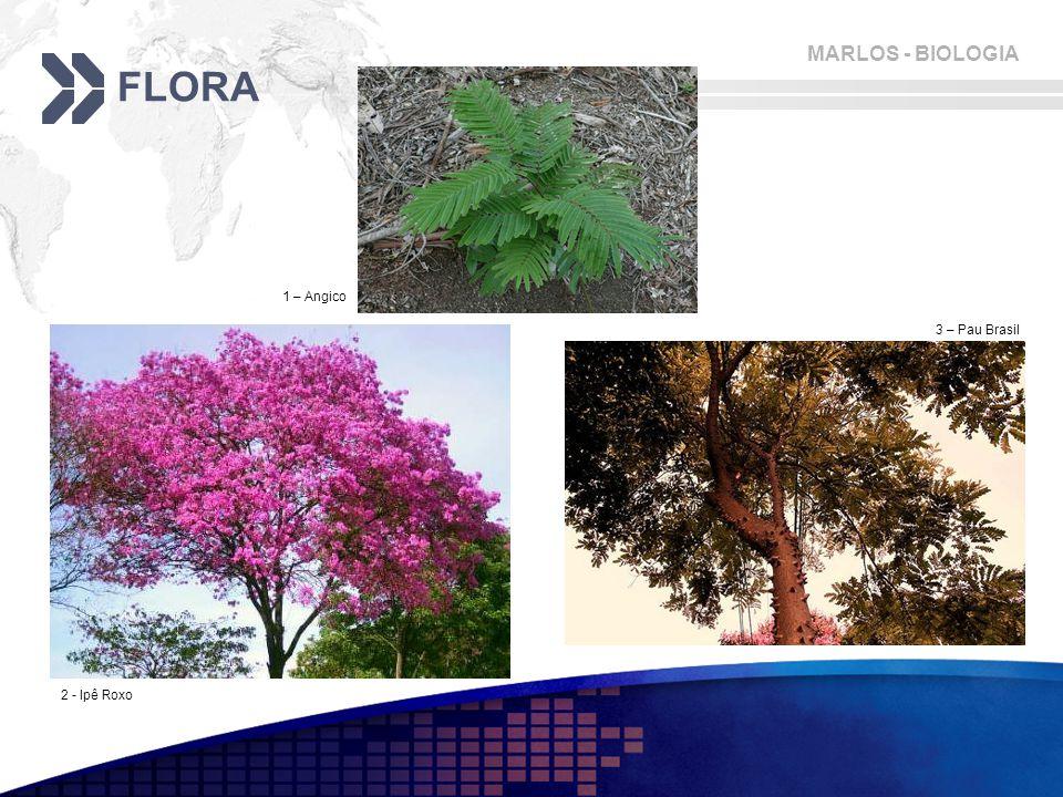 FLORA 1 – Angico 3 – Pau Brasil 2 - Ipê Roxo