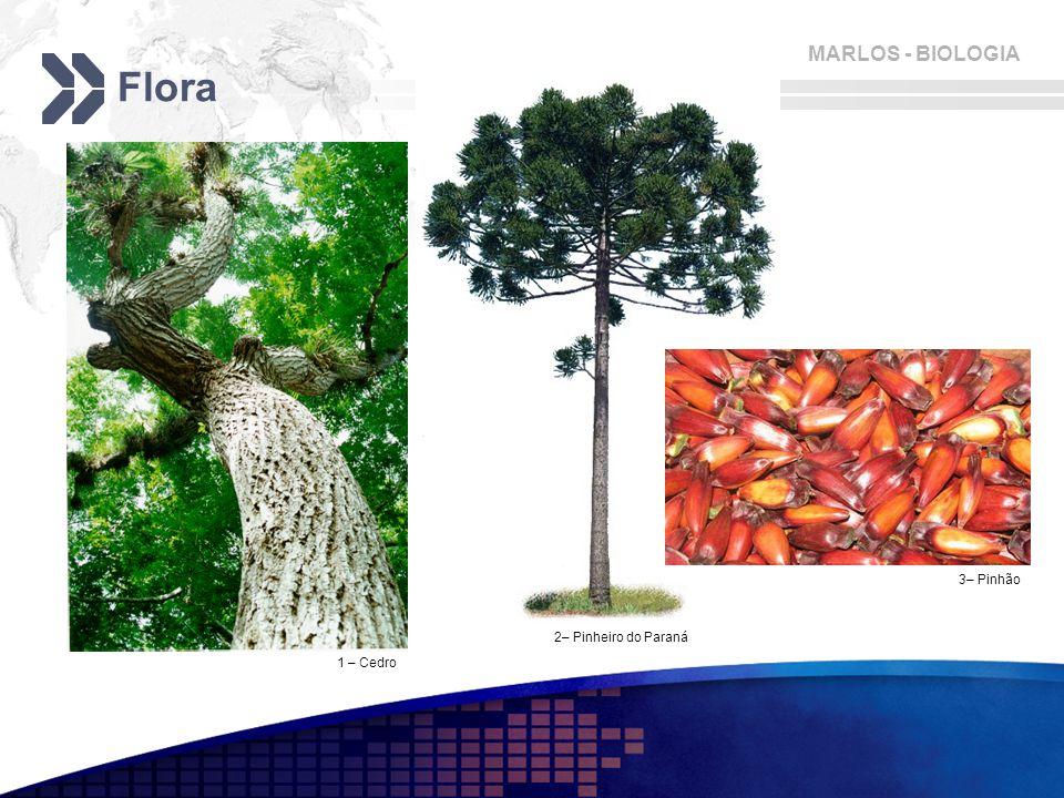 Flora 3– Pinhão 2– Pinheiro do Paraná 1 – Cedro