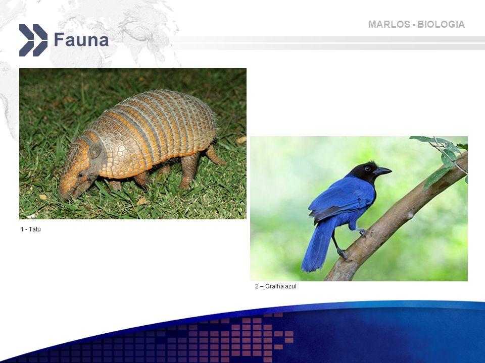 Fauna 1 - Tatu 2 – Gralha azul