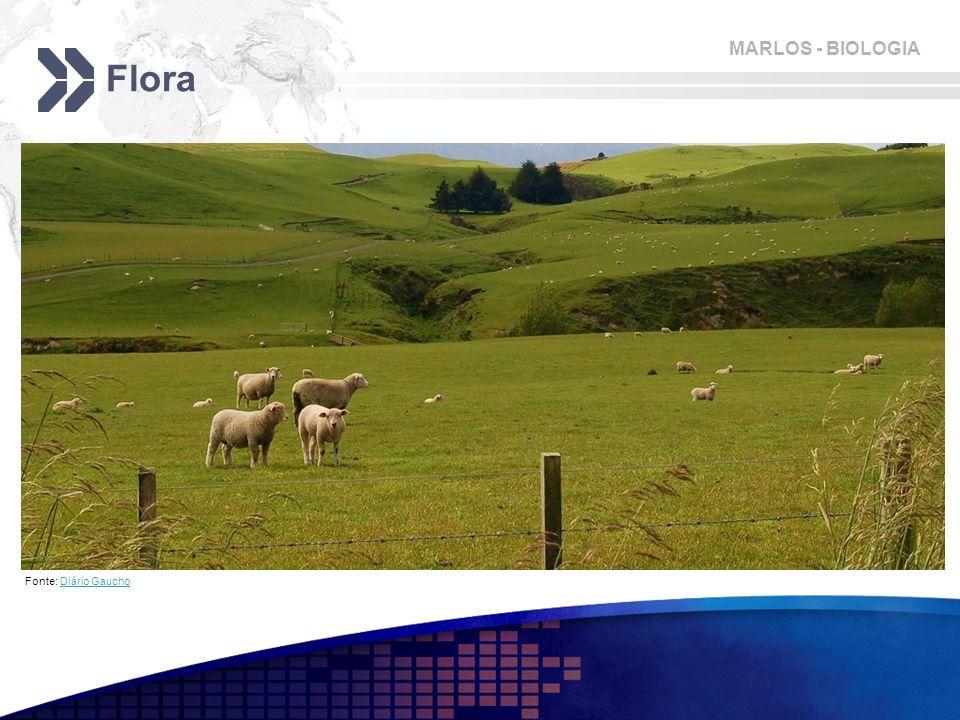 Flora Fonte: Diário Gaucho