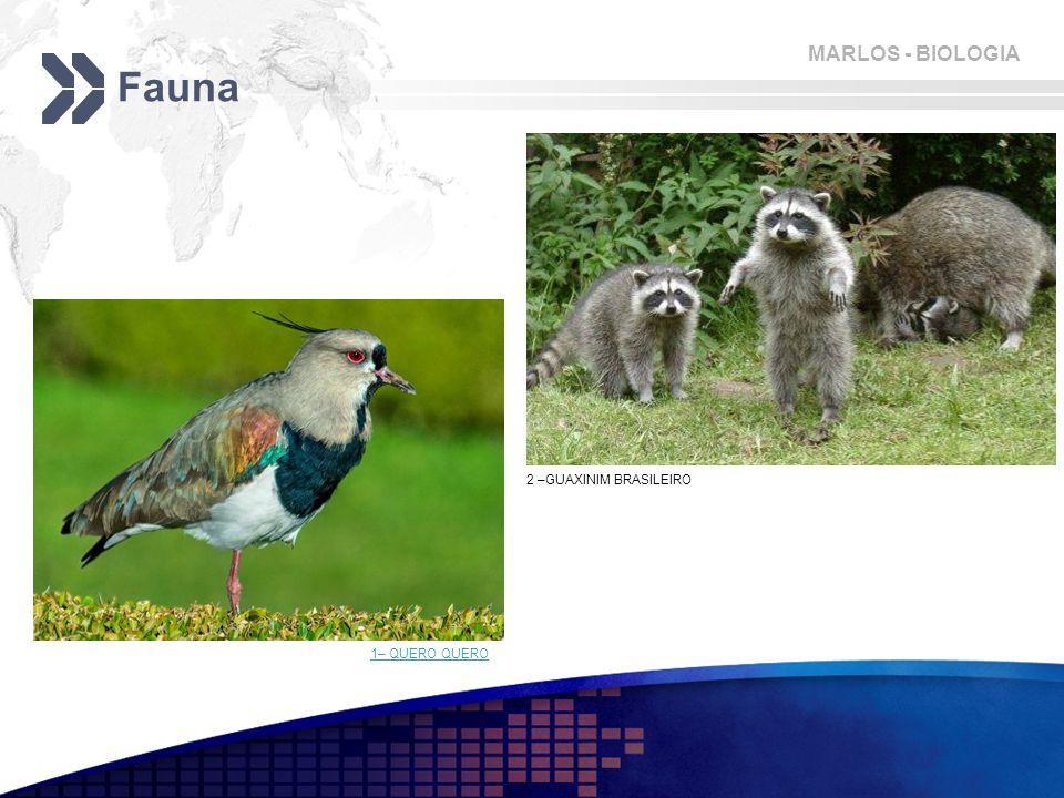 Fauna 2 –GUAXINIM BRASILEIRO 1– QUERO QUERO