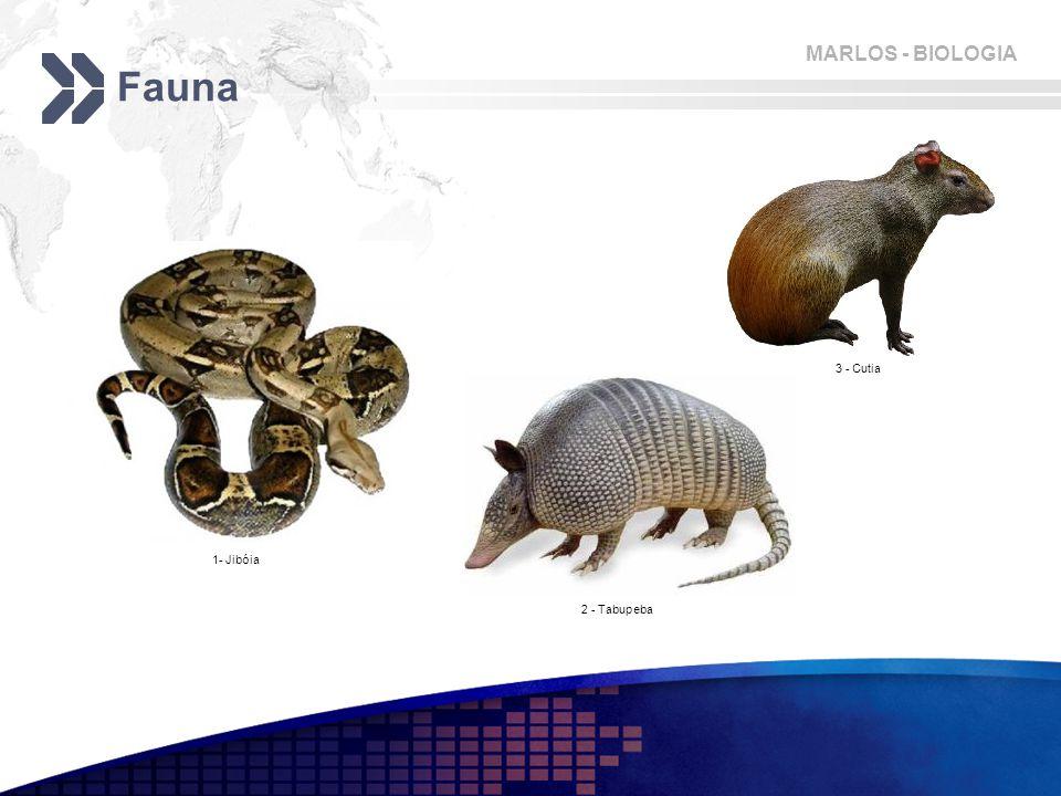 Fauna 3 - Cutia 1- Jibóia 2 - Tabupeba