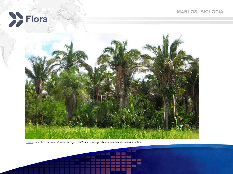 Flora http://painelflorestal.com.br/noticias/artigo/13522/o-carvao-vegetal-de-macauba-e-babacu-e-melhor.