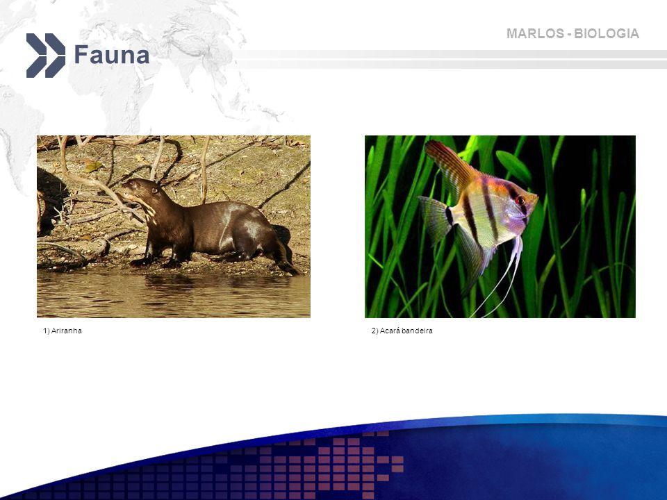 Fauna 1) Ariranha 2) Acará bandeira
