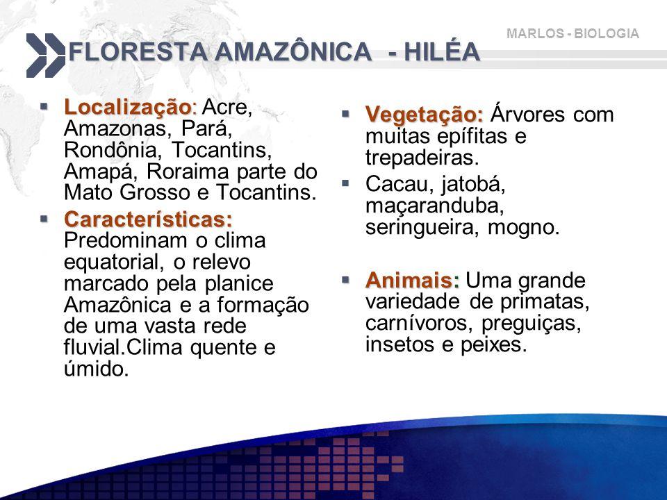 FLORESTA AMAZÔNICA - HILÉA