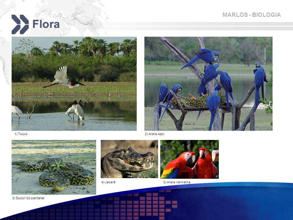 Flora 1) Tuiuiú 2) Arara Azul 4) Jacaré 3) Arara vermelha