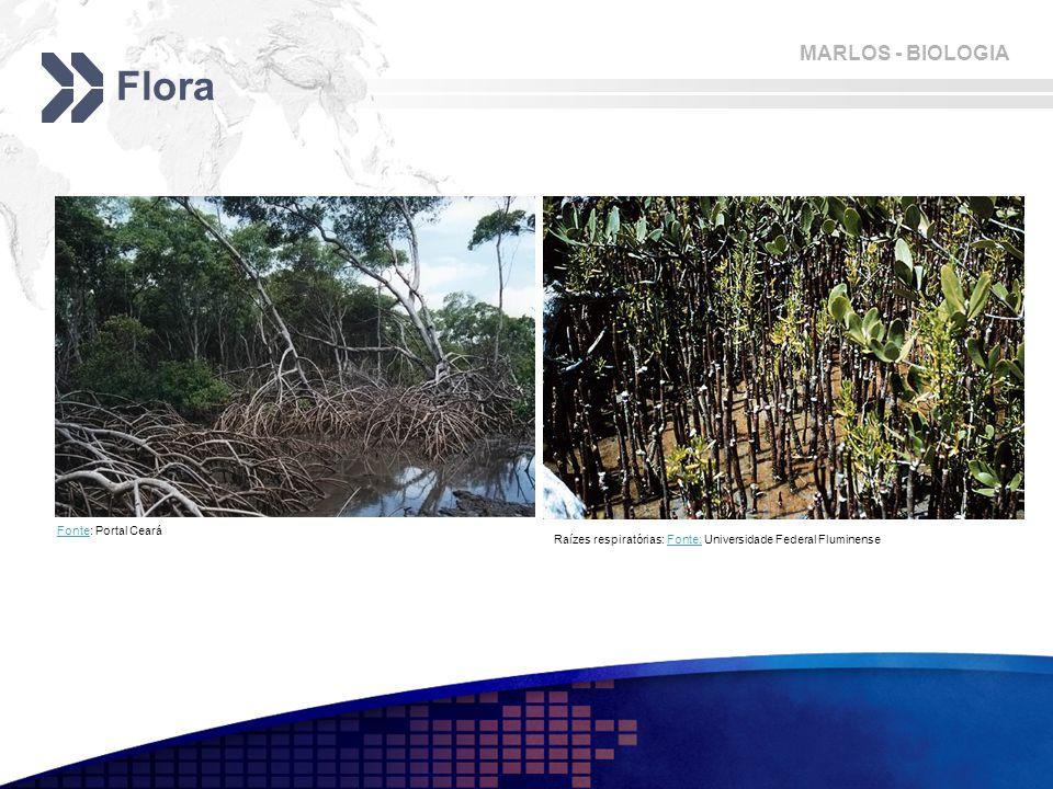 Flora Fonte: Portal Ceará