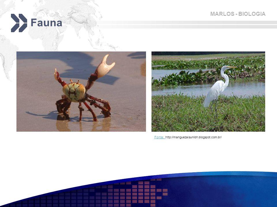 Fauna Fonte: http://manguezaisunibh.blogspot.com.br/