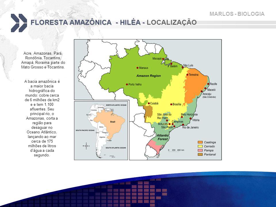 FLORESTA AMAZÔNICA - HILÉA - LOCALIZAÇÃO