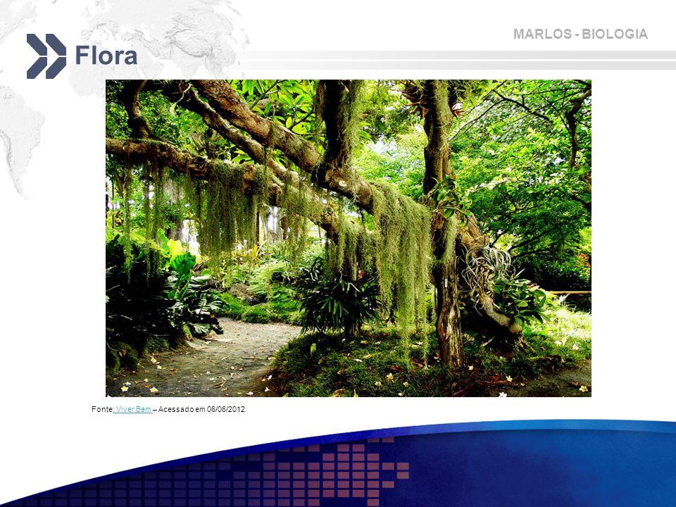 Flora Fonte: Viver Bem – Acessado em 06/06/2012