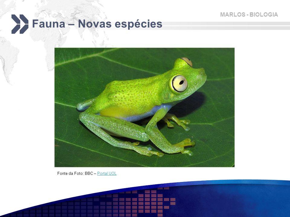 Fauna – Novas espécies Fonte da Foto: BBC – Portal UOL