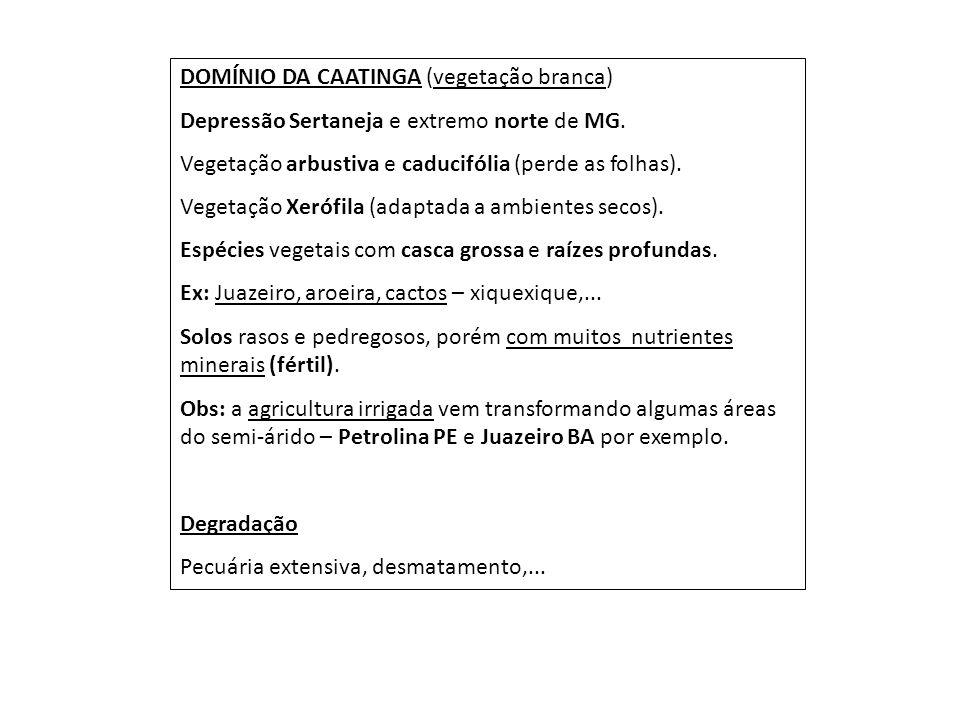 DOMÍNIO DA CAATINGA (vegetação branca)