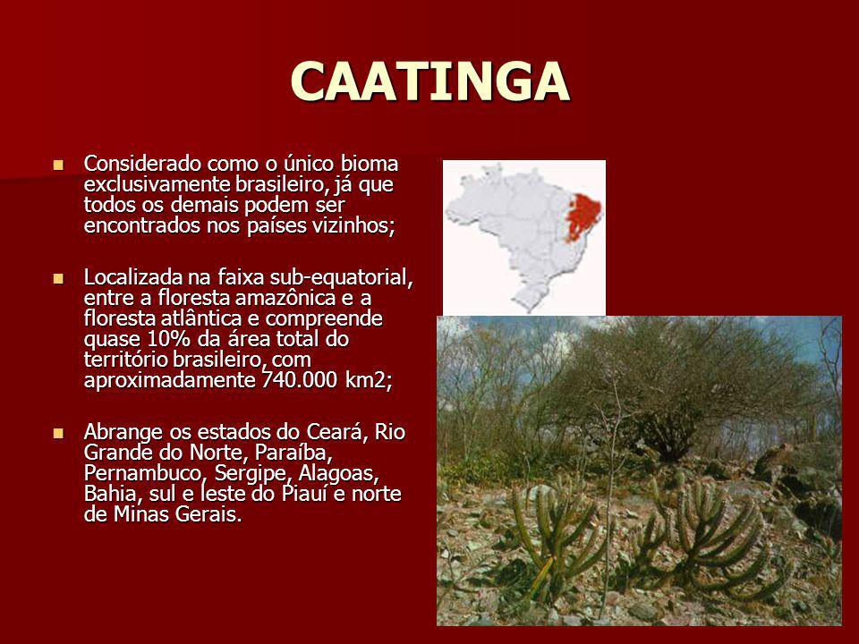 CAATINGA Considerado como o único bioma exclusivamente brasileiro, já que todos os demais podem ser encontrados nos países vizinhos;