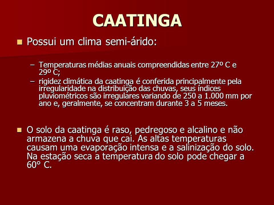 CAATINGA Possui um clima semi-árido: