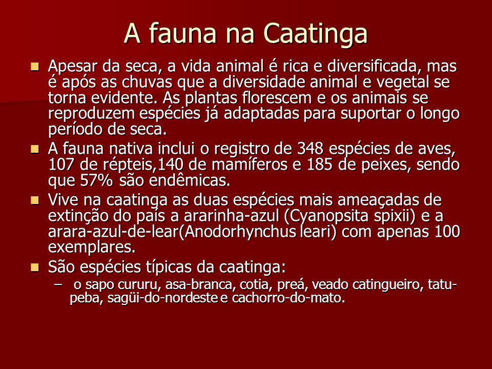 A fauna na Caatinga