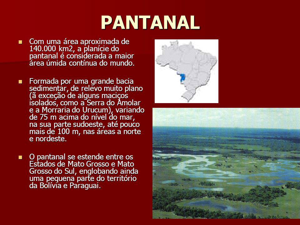 PANTANAL Com uma área aproximada de 140.000 km2, a planície do pantanal é considerada a maior área úmida contínua do mundo.