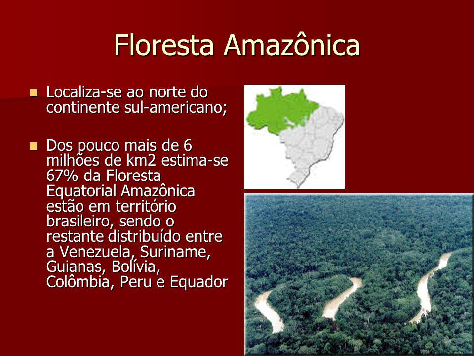 Floresta Amazônica Localiza-se ao norte do continente sul-americano;