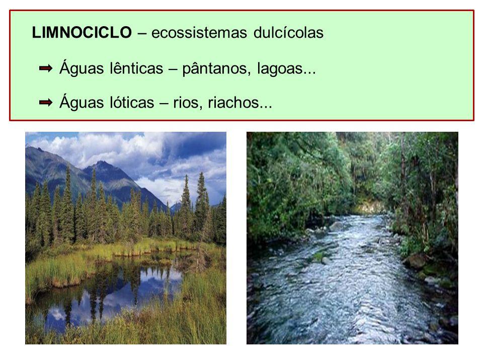 LIMNOCICLO – ecossistemas dulcícolas