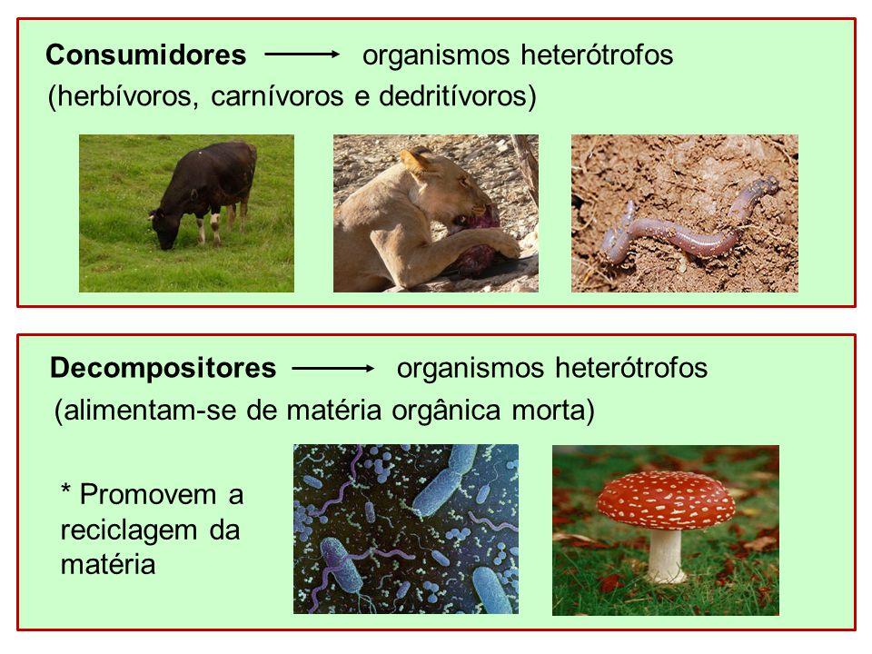 Consumidores organismos heterótrofos. (herbívoros, carnívoros e dedritívoros) Decompositores. organismos heterótrofos.