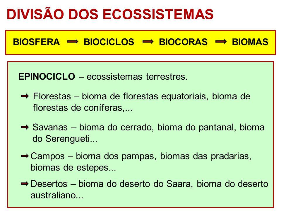 DIVISÃO DOS ECOSSISTEMAS