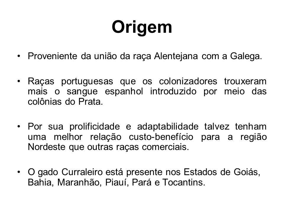 Origem Proveniente da união da raça Alentejana com a Galega.