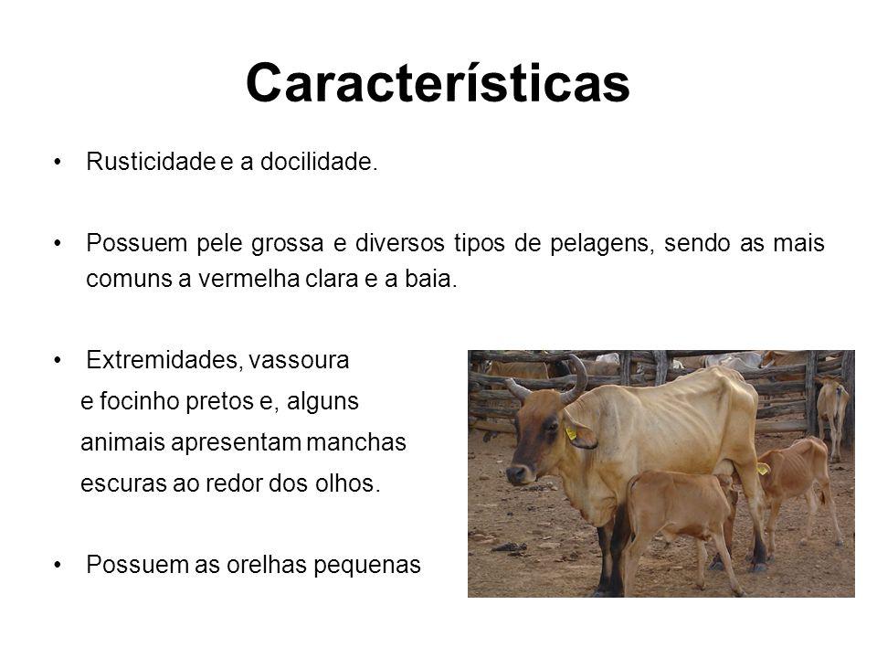 Características Rusticidade e a docilidade.