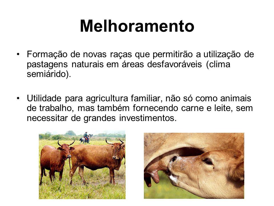 Melhoramento Formação de novas raças que permitirão a utilização de pastagens naturais em áreas desfavoráveis (clima semiárido).