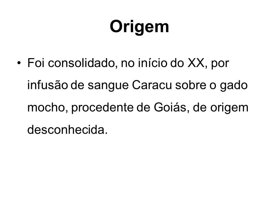 Origem Foi consolidado, no início do XX, por infusão de sangue Caracu sobre o gado mocho, procedente de Goiás, de origem desconhecida.