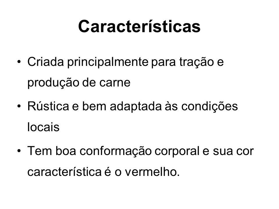 Características Criada principalmente para tração e produção de carne