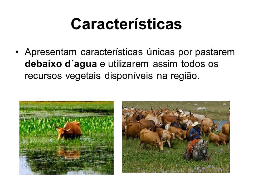 Características Apresentam características únicas por pastarem debaixo d´agua e utilizarem assim todos os recursos vegetais disponíveis na região.