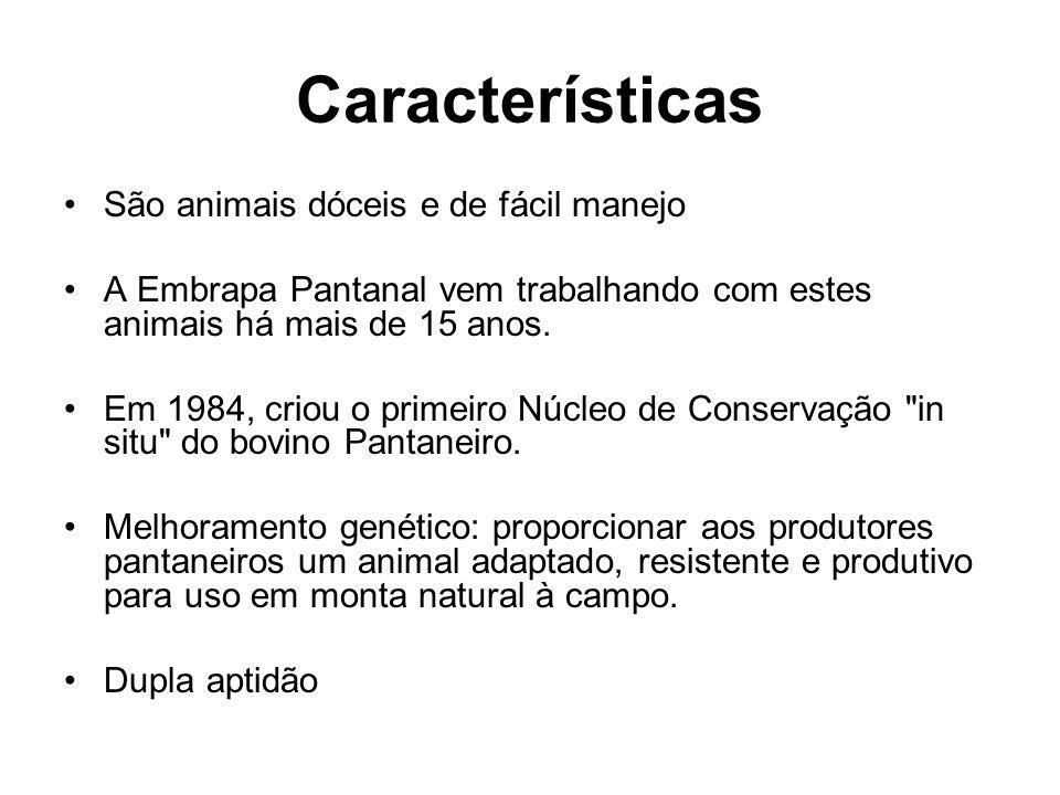 Características São animais dóceis e de fácil manejo