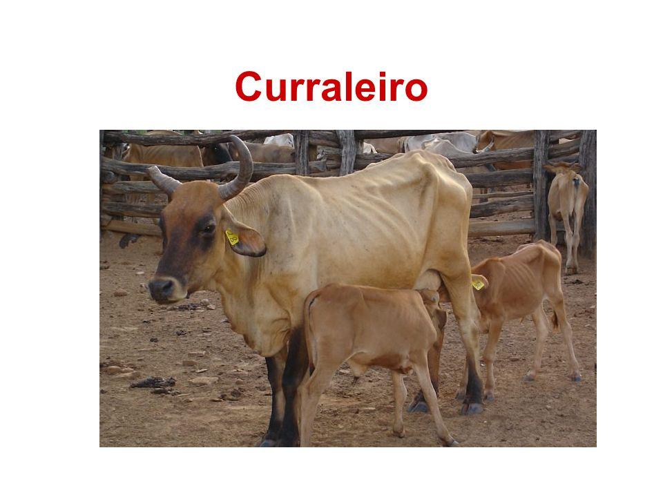 Curraleiro