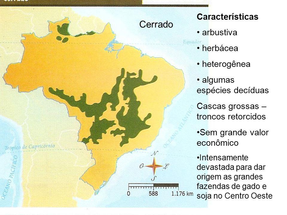 Cerrado Características arbustiva herbácea heterogênea