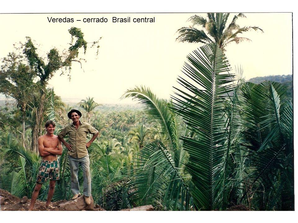 Veredas – cerrado Brasil central