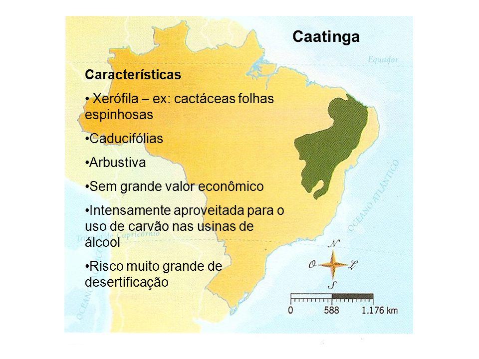 Caatinga Características Xerófila – ex: cactáceas folhas espinhosas