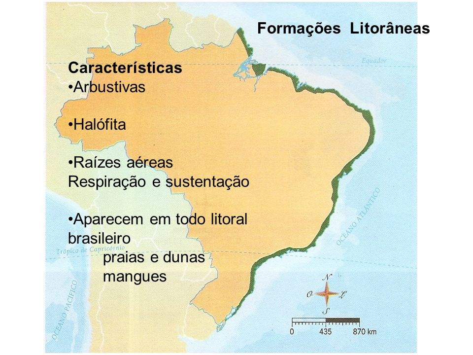 Formações Litorâneas Características. Arbustivas. Halófita. Raízes aéreas. Respiração e sustentação.