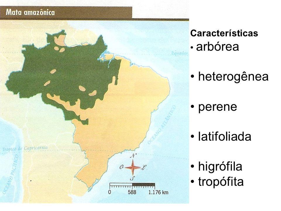 heterogênea perene latifoliada higrófila tropófita Características
