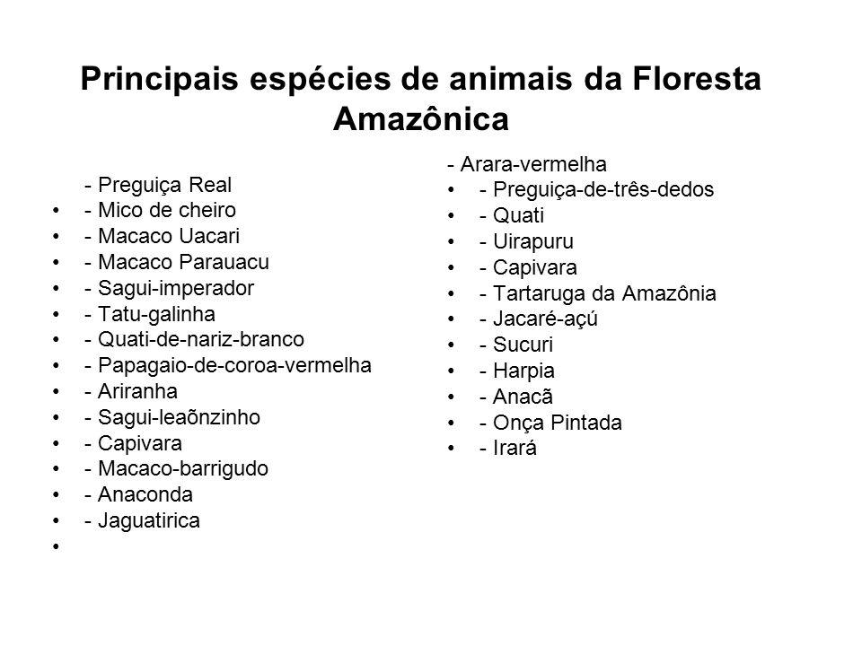 Principais espécies de animais da Floresta Amazônica