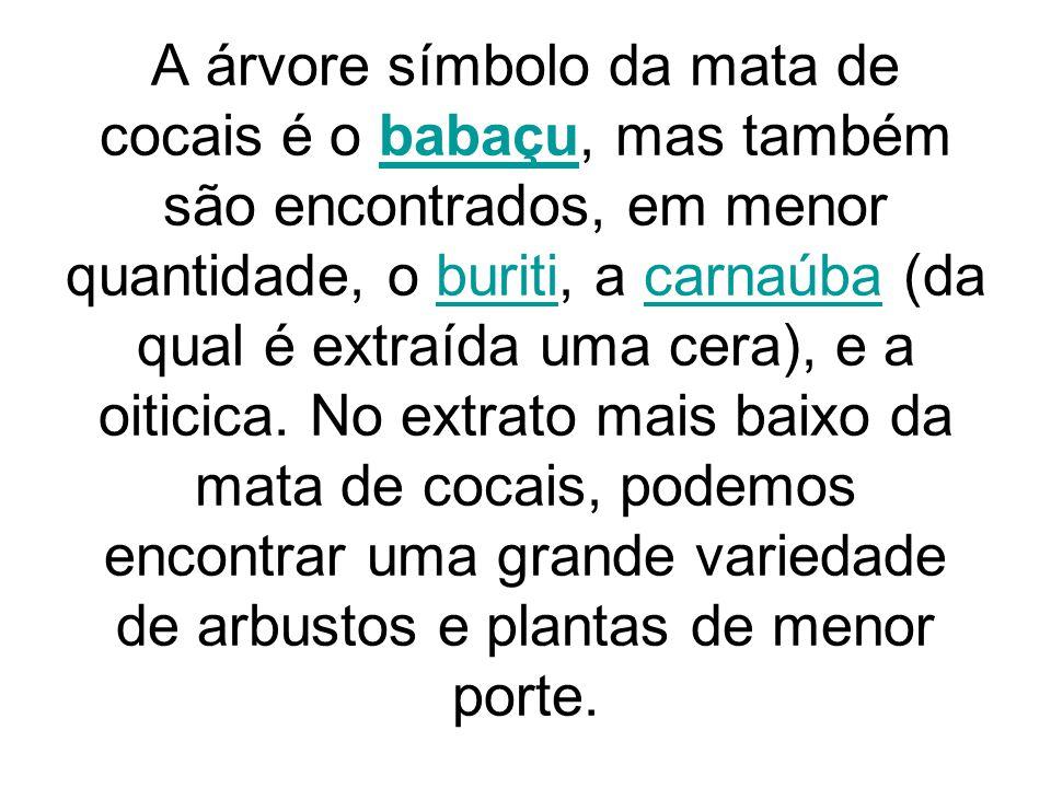 A árvore símbolo da mata de cocais é o babaçu, mas também são encontrados, em menor quantidade, o buriti, a carnaúba (da qual é extraída uma cera), e a oiticica.