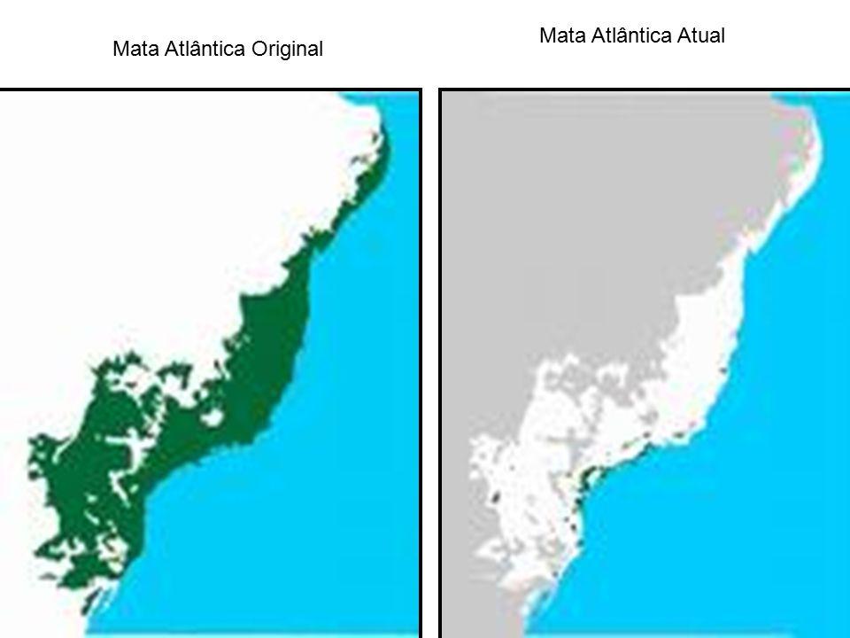 Mata Atlântica Atual Mata Atlântica Original