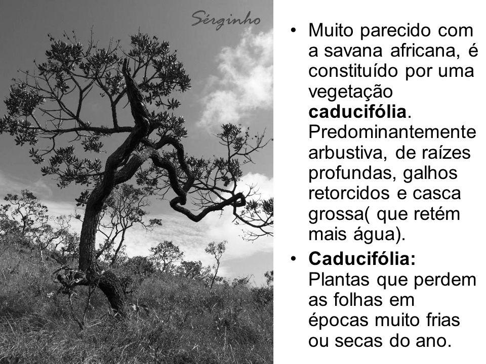 Muito parecido com a savana africana, é constituído por uma vegetação caducifólia. Predominantemente arbustiva, de raízes profundas, galhos retorcidos e casca grossa( que retém mais água).